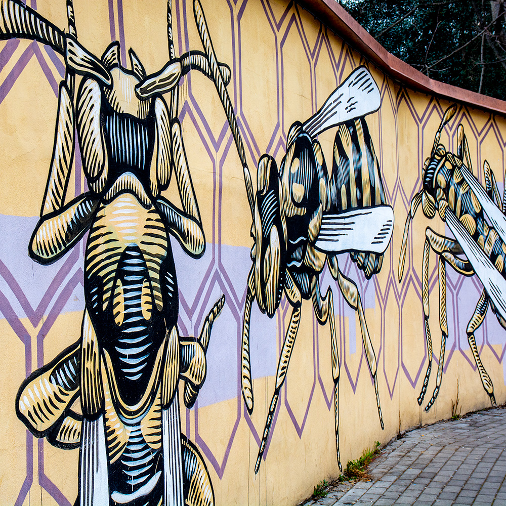 Visite d'un quartier romaine et son art de rue, loin du tourisme de masse.